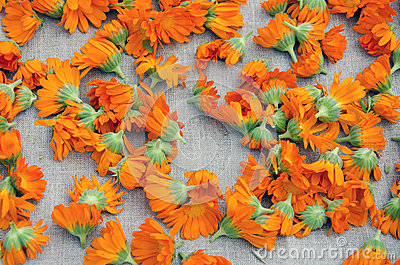 Colorful calendula blossoms on linen cloth