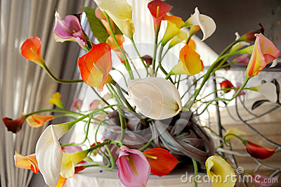 Colorful Callas