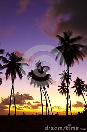 Free Colorful Caribbean Sunset And Palm Trees, Antigua Stock Images - 105137284