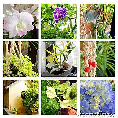 tropical gardens decor collage stock photo image: 30121530