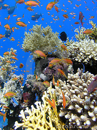 Free Colorful Coral Reef Royalty Free Stock Photo - 3771135
