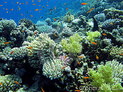 Colorful coral reef with hard and soft corals