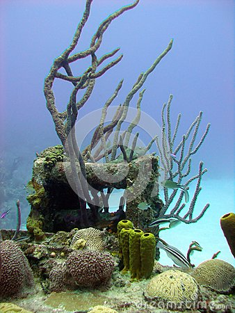 Colorful coral reef scene