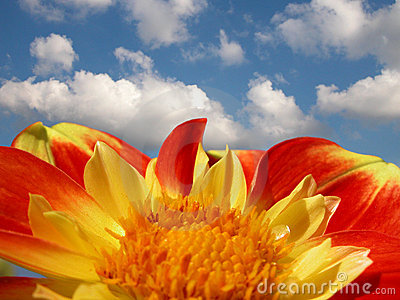 Colorful dahlia against bright summer sky