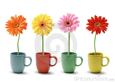 Colorful daisy in coffee mug