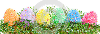 Colorful Easter eggs in garden cress