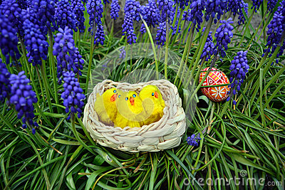 Colorful easter eggs and little chickens on a basket on a green grass Stock Photo