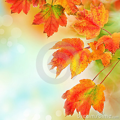 Free Colorful Fall Leaves Background. Shallow Focus. Stock Photo - 21465740