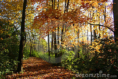 Colorful fall path