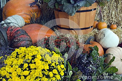 Colorful fall pumpkins and flowers