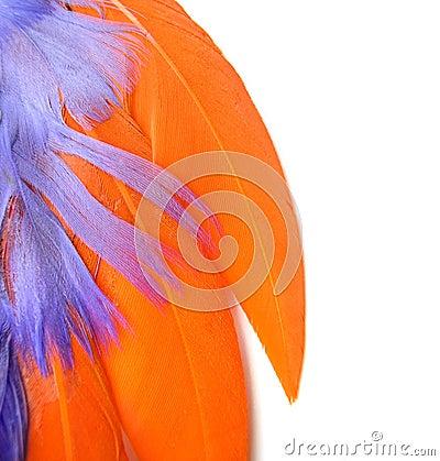 Colorful feathers closeup - orange, purple