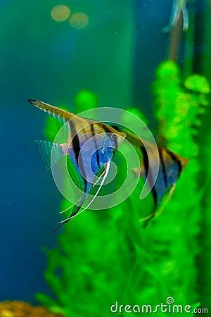 Free Colorful Fish Aquarium Stock Image - 17682221