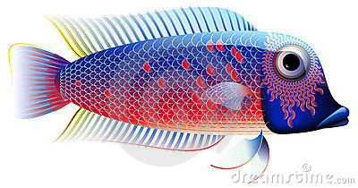 Colorful Fish, Chiclid