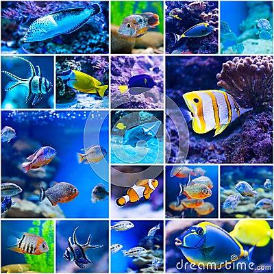 Free Colorful Fish In Aquarium Saltwater World Stock Image - 52471881