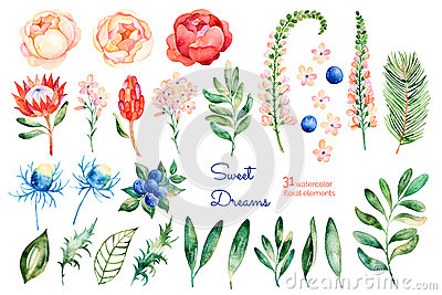 Colorful floral collection with roses,flowers,leaves,protea,blue berries,spruce branch,eryngium Stock Photo