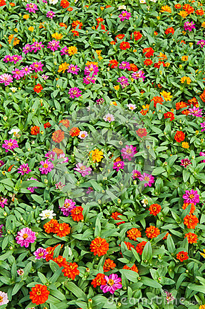 Colorful flower growing