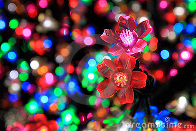 Colorful Flower Of Light