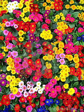Free COLORFUL FLOWERS Stock Image - 14929171