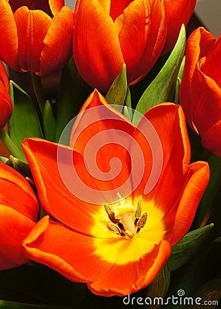 Colorful flowers in bloom