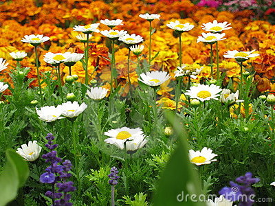 Colorful flowers in bloom