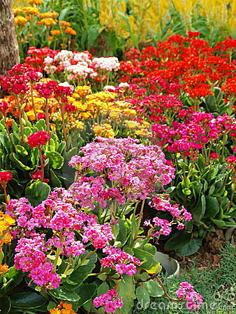 Colorful Flowers of Joy