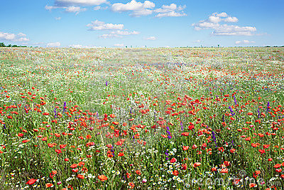 Colorful flowers in meadow