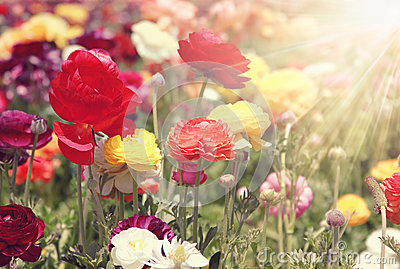 Colorful flowers sunlight