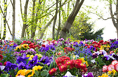 Colorful flowers and trees