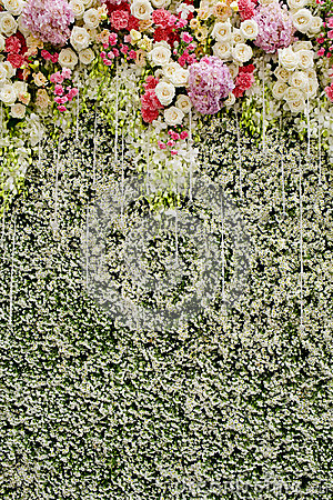 Free Colorful Flowers With Green Wall For Wedding Backdrop Stock Photos - 48695203