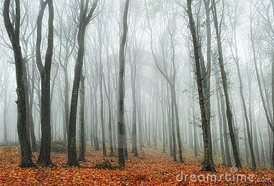 Colorful forest with fog in autumn