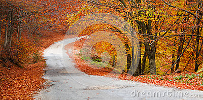 Colorful forest panorama