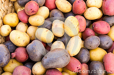 Colorful fresh potatoes on display