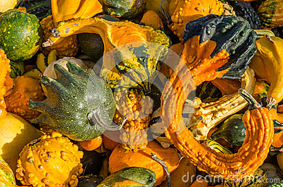 Colorful gourds on display at the market