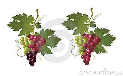 Colorful grape