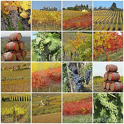 Colorful grape harvest time collage