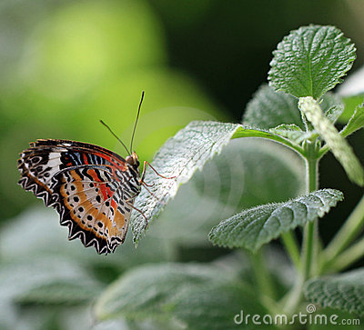 Colorful and healthy butterfly