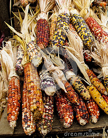 Colorful holiday corn