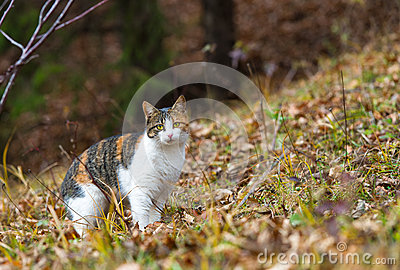 Colorful home cat in the forest for hunting