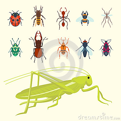 Free Colorful Insects Icons Isolated Wildlife Wing Detail Summer Bugs Wild Vector Illustration Stock Photography - 92625252