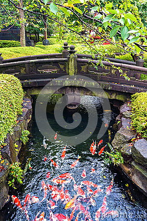 Free Colorful Japanese Koi Carp Fish In A Pond Stock Photos - 79087903