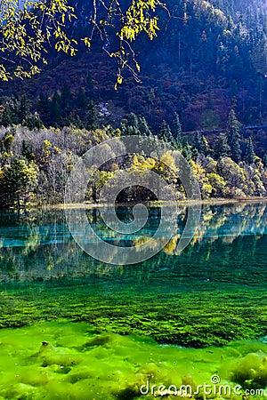 Colorful lake in Jiuzhaigou