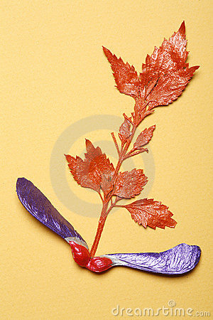 Colorful leaf arrangement