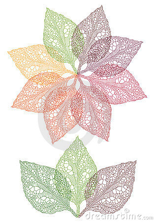 Colorful leaf flower, vector