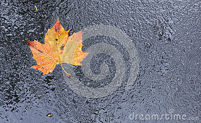 Colorful Leaf on Wet Asphalt
