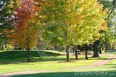 Colorful Leaves on Maple Trees