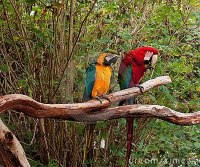 Colorful Macaw Parrots Stock Photos - Image: 23288943