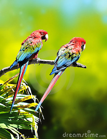 Free Colorful Macaw Parrots Royalty Free Stock Photo - 5041115