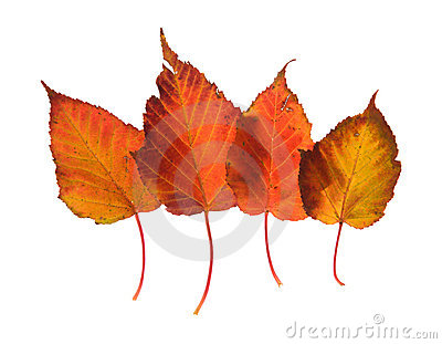 Colorful overlapping autumnal leaves