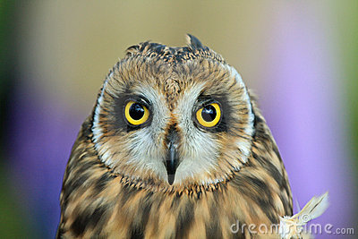 Colorful Owl with large yellow eyes