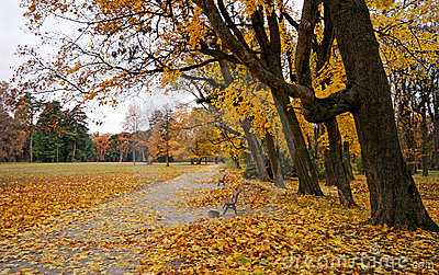 Colorful park during fall